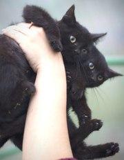Котята девочки в добрые руки