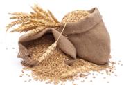 Зерно (ищем покупателей Витебская обл) - Пшеница,  Ячмень,  Тритикале!