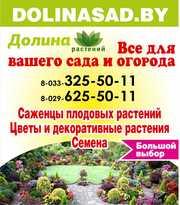 Саженцы плодовых и декор-ных растений,  луковицы цветов,  семена.Витебск