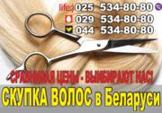 Покупка волос дорого в Витебск.