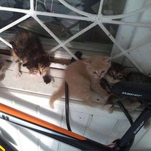 Котята ждут своих надежных и любящих хозяев