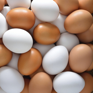 куриное яйца С1