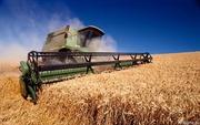 Куплю зерно фуражное пшеницу,  рожь,  ячмень от 20тонн