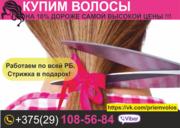 Купим волосы. Витебск и область. Натуральные волосы. Цена волос.